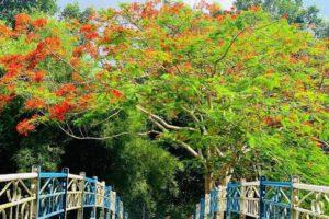 [Tây Ninh] Top những điểm đến nổi tiếng độc đáo tại Tây Ninh