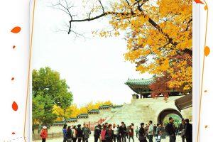 Cung điện Gyeongbok điểm đến nổi bật Hàn Quốc
